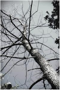 Use a madeira sem agredir a natureza