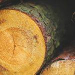Porque as madeiras apodrecem